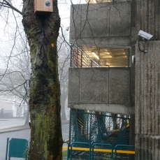 Mark III (number 20) nestbox in situ in Derby city centre, next to Bold Lane car park. Copyright Anthony Carr