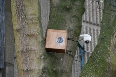 Mark III (number 09) nestbox in situ in Derby city centre, facing St Werburgh's church. Copyright Anthony Carr