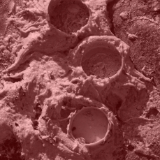Film still from 'A Baker's Dozen: A Lunar Study in Variations of Size and Shape'. Copyright Anthony Carr