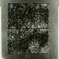 Sciaroidea Galaxias (photograph XIII of set). Copyright Anthony Carr